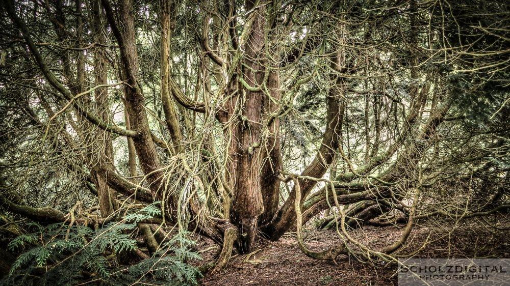 Bäume wie im Zauberwald