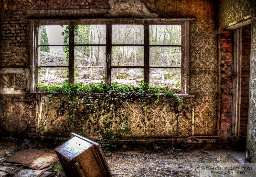 Die Natur erobert sich Schritt für Schritt das Haus zurück ....
