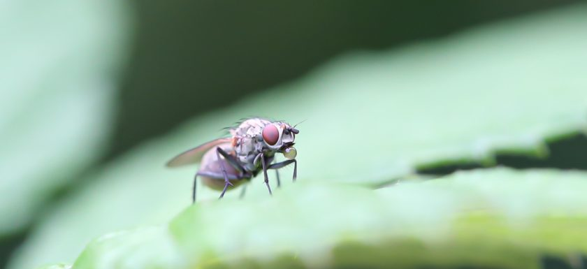 makrofotografie, makrolovers, macrophotography, makro, totalmacro, insekten, insectos, insects, macroart,
