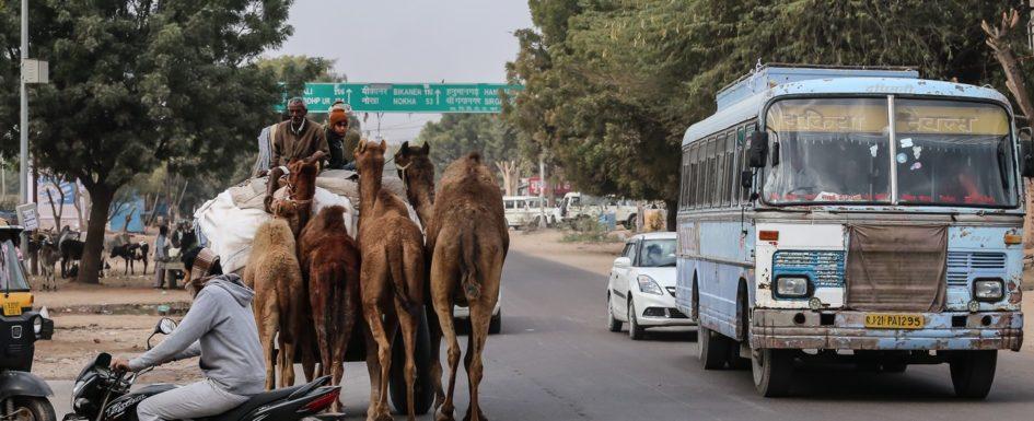 Kamelhändler, Bikaner Rajasthan, Indien